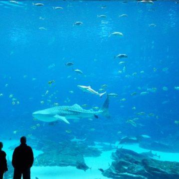 Public-Aquariums-Design-Operation-Manufacture-Maintenance